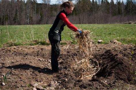 gräver i landet